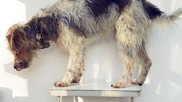 Hondenkoekjes van Yvette van Boven