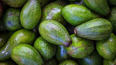 Deeg van avocado
