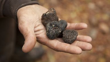 Truffels: verrassende culinaire bestemmingen