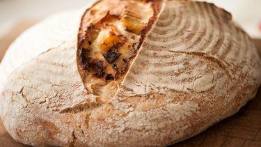 miso brood