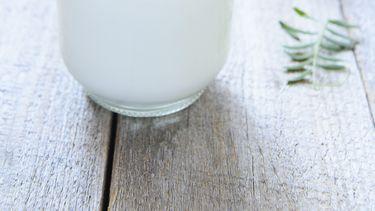 cashew yoghurt